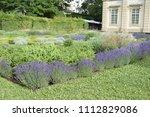 lavender  lavandula... | Shutterstock . vector #1112829086