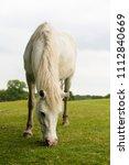 Grazing Horse In A Field