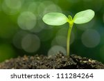 sunflower sprout on green bokeh ... | Shutterstock . vector #111284264