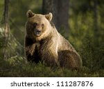 A Brown Bear In The Forest