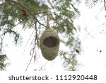 Small photo of Waver bird nest