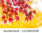 japan maple leaf in autumn... | Shutterstock . vector #1113001058