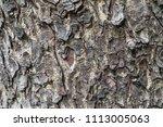 bark of the tree the brown bark ... | Shutterstock . vector #1113005063