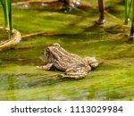 usa  utah  san juany county ... | Shutterstock . vector #1113029984
