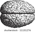 old time engraving of the brain | Shutterstock .eps vector #11131276