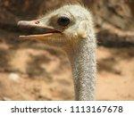 emu portrait side view in... | Shutterstock . vector #1113167678