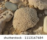 close up of white coral sponge... | Shutterstock . vector #1113167684