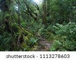 a magic jungle in cameron... | Shutterstock . vector #1113278603
