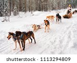 woman at husky dogs sled in... | Shutterstock . vector #1113294809