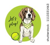 Stock vector vector portrait of beagle dog with tennis ball let s play green curveball and background summer 1113331463