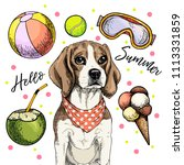 vector portrait of beagle dog.... | Shutterstock .eps vector #1113331859