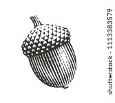 Acorn. Hand Drawn Engraving...