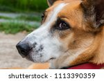 close up the dog face show sad... | Shutterstock . vector #1113390359