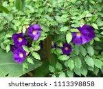 purple blooming flowers | Shutterstock . vector #1113398858
