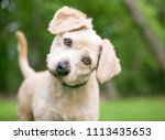 a cute labrador retriever... | Shutterstock . vector #1113435653