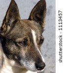 dog | Shutterstock . vector #1113457