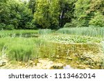 view over the wetlands with... | Shutterstock . vector #1113462014