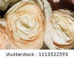 many flower buds buttercup... | Shutterstock . vector #1113522593