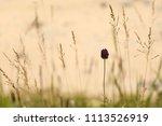 flowers on a meadow. macro. | Shutterstock . vector #1113526919