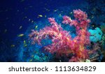 coral reef  red sea | Shutterstock . vector #1113634829