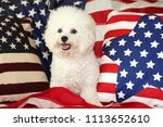 bichon frise dog with american... | Shutterstock . vector #1113652610