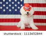 bichon frise dog with american... | Shutterstock . vector #1113652844