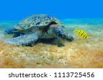 sea turtle and yellow pilot... | Shutterstock . vector #1113725456
