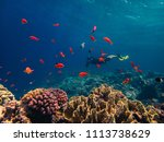 beautiful coral reef and a... | Shutterstock . vector #1113738629