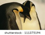 close up of two emperor...   Shutterstock . vector #111375194