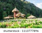 garden designs in high season... | Shutterstock . vector #1113777896