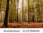 beech forest in fall colors  ... | Shutterstock . vector #1113786044