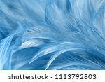 blue chicken feathers in soft... | Shutterstock . vector #1113792803