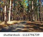 alley in the forest | Shutterstock . vector #1113796739