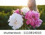 cute young blonde girl spends... | Shutterstock . vector #1113814010
