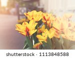 window box of yellow and orange ... | Shutterstock . vector #1113848588