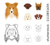 muzzle of different breeds of...   Shutterstock .eps vector #1113851654
