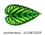 exotic tropical leaf isolated... | Shutterstock . vector #1113871259