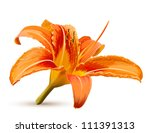 Lily Vector Flower Blossom