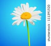 daisy flower vector background. ... | Shutterstock .eps vector #111391520