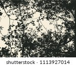tree and branches silhouette.... | Shutterstock .eps vector #1113927014