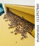 swarm of bees | Shutterstock . vector #1113927860