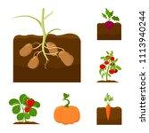 plant  vegetable cartoon icons... | Shutterstock .eps vector #1113940244