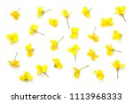 Rapeseed Blossom Isolated On...