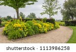colorful yellow flowerbed with... | Shutterstock . vector #1113986258
