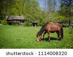 horse eating on a street of a...   Shutterstock . vector #1114008320
