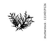 black silhouette with thuja... | Shutterstock .eps vector #1114019126