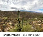 Saguaro Cactus With Red Flower...