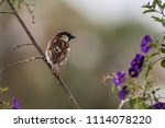 small finch perched on slanted...   Shutterstock . vector #1114078220