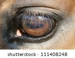 Close Up Of A Horse Eye   Very...