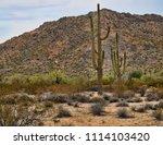 saguaro cactus cereus giganteus ... | Shutterstock . vector #1114103420